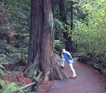 Chris Pymm at Muir Woods