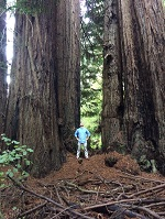 Chris Pymm Muir Woods Trees